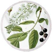 Bird Cherry Cerasus Padus Or Prunus Padus Round Beach Towel