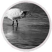 Bird Drinking Round Beach Towel