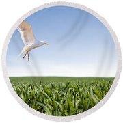 Bird Flying Over Green Grass Round Beach Towel