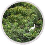Bird In Bush Round Beach Towel