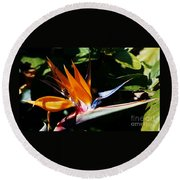 Grotto Bay Bird Of Paradise # 1 Round Beach Towel