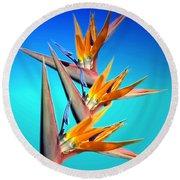 Bird Of Paradise 2013 Round Beach Towel