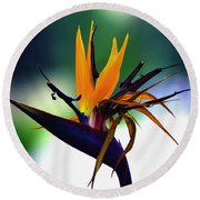 Bird Of Paradise Flower - Square Round Beach Towel