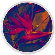 Bird Of Paradise Flower Round Beach Towel