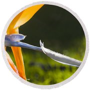 Bird Of Paradise Round Beach Towel
