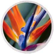 Bird Of Paradise - Strelitzia Reginae  Round Beach Towel