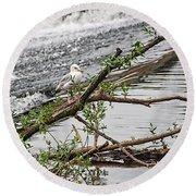 Bird On A Weir Round Beach Towel