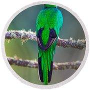 Bird Perching On A Branch, Savegre Round Beach Towel
