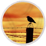 Bird Sitting On Prison Fence Round Beach Towel