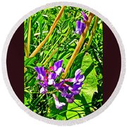 Bird Vetch On Bow River Trail In Banff National Park-alberta  Round Beach Towel