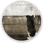 Bird Watching Kitty Cat Bw Round Beach Towel