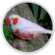 Male Zebra Finch Round Beach Towel