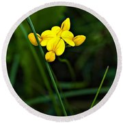Bird's-foot Trefoil Round Beach Towel