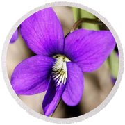 Birds Foot Violet Round Beach Towel