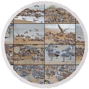 Birds Of Many Feathers Round Beach Towel