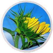 Birth Of A Sunflower By Kaye Menner Round Beach Towel