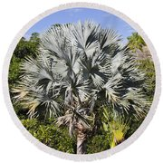 Bismarck Palm  Bismarckia Nobilis Round Beach Towel