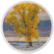 Bison And Cottonwood Round Beach Towel