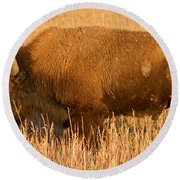 Bison At The Elk Ranch In Grand Teton National Park Round Beach Towel