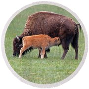 Bison Calf Having Breakfast In  Yellowstone National Park Round Beach Towel