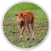 Bison Calf In The Flowers Yellowstone National Park Round Beach Towel