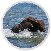 Bison Calf Running After Mama In Yellowstone National Park Round Beach Towel