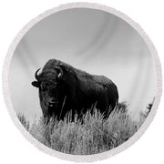 Bison Cow On An Overlook In Yellowstone National Park Black And White Round Beach Towel