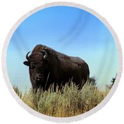 Bison Cow On An Overlook In Yellowstone National Park Round Beach Towel