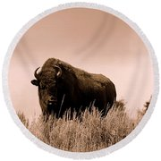 Bison Cow On An Overlook In Yellowstone National Park Sepia Round Beach Towel
