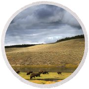 Bison Grazing Along The Yellowstone River In Hayden Valley Round Beach Towel