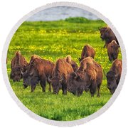 Bison Herd Grazing In Lamar Valley Round Beach Towel