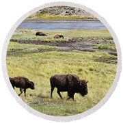 Bison Mother And Calf In Yellowstone National Park Round Beach Towel