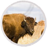 Bison On Tall Grass Iv Round Beach Towel