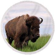 Bison On The Prairie Round Beach Towel