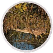 Bittern Stretched Out Round Beach Towel