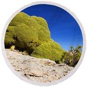Bizarre Green Plant Bolivia Round Beach Towel