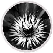 Black And White Clematis Round Beach Towel
