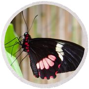 Black And Red Cattleheart Butterfly Round Beach Towel