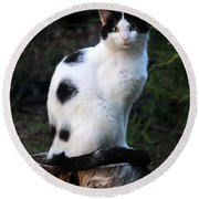Black And White Cat On Tree Stump Round Beach Towel