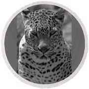 Black And White Leopard Portrait  Round Beach Towel