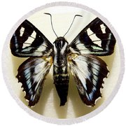 Black And White Moth Round Beach Towel