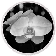 Black And White Orchid With Lights - Square Round Beach Towel