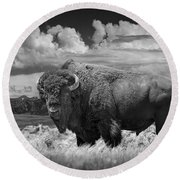 Black And White Photograph Of An American Buffalo Round Beach Towel