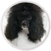 Black And White Poodle Round Beach Towel