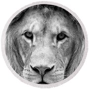 Black And White Portrait Of A Lion Round Beach Towel