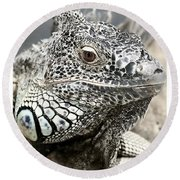 Black And White Saurian Animal Nature Iguana Round Beach Towel