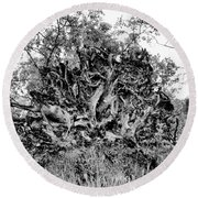 Black And White Uprooted Tree Round Beach Towel
