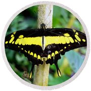 Black And Yellow Swallowtail Butterfly Round Beach Towel