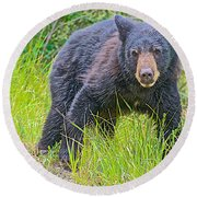 Black Bear Cub Near Road In Grand Teton National Park-wyoming Round Beach Towel