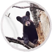 Black Bear Cub Up In A Dead Tree In Northern Minnesota Round Beach Towel